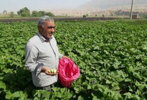 خسارت ۷۹۷ میلیارد تومانی بخش کشاورزی آذربایجان شرقی در سال زراعی جاری