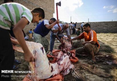 مراکز عرضه دام در عید قربان امسال تعطیل است