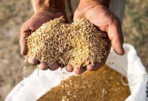 خرید تضمینی و توافقی ۴۰۰ هزار تن گندم در آذربایجان شرقی
