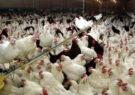 آنفلوآنزای پرندگان در زیستگاههای آذربایجانشرقی مشاهده نشده است