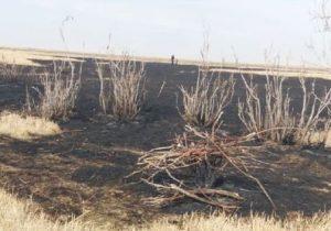 مهار آتش سوزی در تالاب قره قشلاق بناب