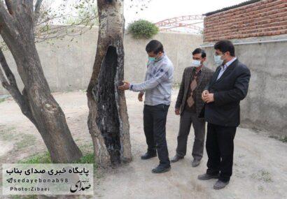 نقض حقوق شهروندان با سوزاندن درخت توسط یکی از اهالی در بند پردیس ۱۲ !!!/ آتش زدن درخت ۴۰ سال به منظور تردد بهتر خودرو !!