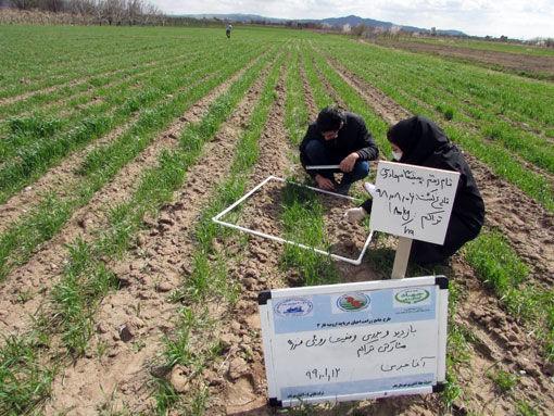اجرای طرح بهینه تراکم مناسب کاشت پی دی تی در شهرستان بناب