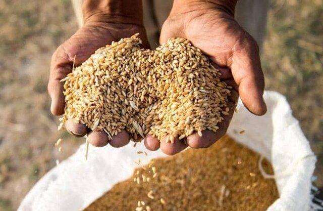 خرید تضمینی و توافقی 400 هزار تن گندم در آذربایجان شرقی