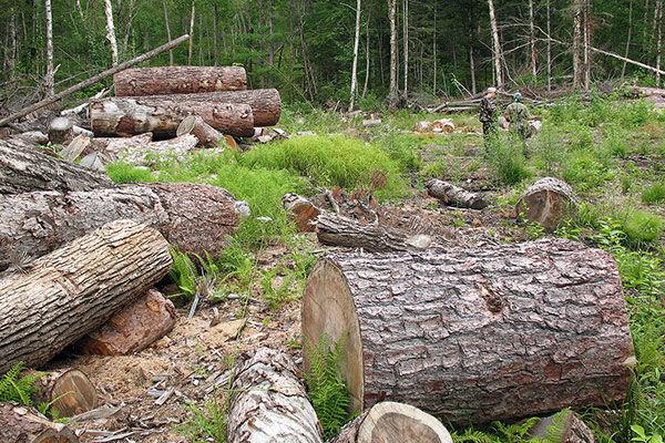 قطعکنندگان غیرمجاز اشجار در تالاب قره قشلاق بناب در چنگال قانون