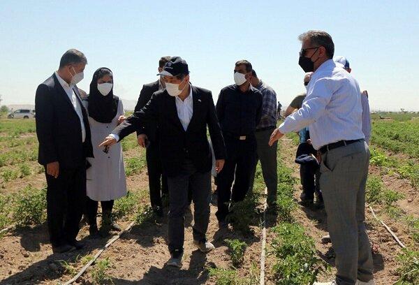 سفیر ژاپن در ایران از اجرای طرحهای کشاورزی بناب بازدید کرد