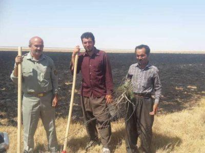 آتش سوزی در تالاب «قره قشلاق» مهار شد